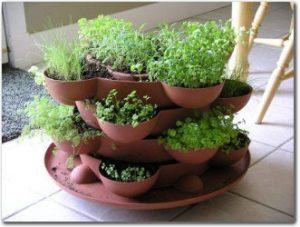 Container indoor herb garden.