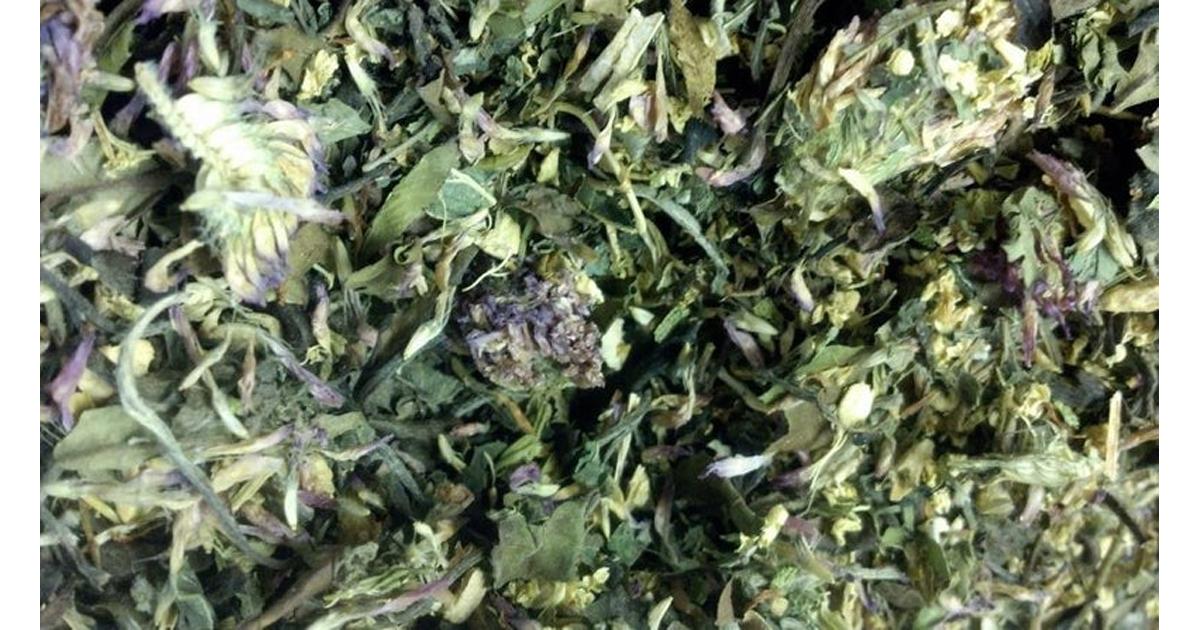 Fidnemed (Sacred Grove) – Organic Green Tea Herbal Blend